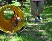 Tierbetreuung Stieglecker - Welpentraining Indoor Outdoor Photos - Hundewelpen Outdoor Einzeltraining