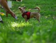 Tierbetreuung Stieglecker - Welpentraining Indoor Outdoor Photos - Outdoor Welpenschule