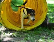 Tierbetreuung Stieglecker - Welpentraining Indoor Outdoor Photos - Outdoor Welpenerziehung