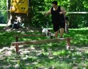 Tierbetreuung Stieglecker - Welpentraining Indoor Outdoor Photos - Outdoor Cavaletti Training