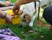 Tierbetreuung Stieglecker - Welpentraining Indoor Outdoor Photos - Welpen Outdoor Kurs