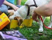 Tierbetreuung Stieglecker - Welpentraining Indoor Outdoor Photos - Hundewelpenkurse