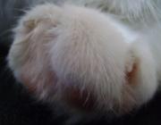 Katzenbetreuung Wien / Katzenpfote - Neben den Zähnen sind die Katzenkrallen die beste Waffe und das beste Handwerkszeug der Katzen. An der Vorderpfote hat die Katze je fünf, an der Hinterpfote je vier Krallen..
