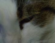 Katzenbetreuung Wien / Katzenaugen - Katzen verfügen über ein ausgezeichnetes Sehvermögen, sowohl bei Tage und vor allem auch in der Nacht. Doch bei völliger Dunkelheit vermag auch ein Katzenauge nichts zu sehen.