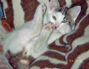 Katzen (Felis silvestris catus) - Katzen sind ausgeprägte Individuen oder gar Persönlichkeiten. Jedes Tier ist in seiner Art einmalig.