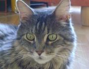 Katzen (Felis silvestris catus) - Die sprichwörtliche Feindschaft zwischen Hund und Katze muss nicht sein. Eine Frage der Gewöhnung!