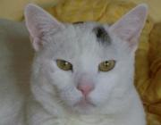 Katzen (Felis silvestris catus) - Die Katze benötigt verschiedene Kletter-, Versteck- und Aussichtsplätze. Richten Sie am besten in jedem Zimmer mindestens einen dieser Plätze ein (je mehr, desto besser).