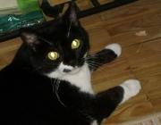 Katzen (Felis silvestris catus) - Jede Katze ist von erster Sekunde an absolut einzigartig, nicht unbedingt durch ein besonderes Aussehen, sondern vor allem durch ein unverwechselbares Verhaltensmuster.