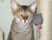 Katzen (Felis silvestris catus) - Das Verhalten einer Katze wird zum einen von Charakter und Instinkten geprägt, zum anderen durch äußere Einflüsse.