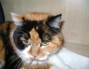 Katzen (Felis silvestris catus) - Der Jagdinstinkt ist ihnen angeboren und kann nicht abgewöhnt werden, eine Wohnungskatze erlegt ihr Spielzeug, Freigänger gelegentlich auch Mäuse, Vögel und andere Kleintiere.