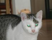 Katzen (Felis silvestris catus) - Katzen sind liebenswert, zärtlich, verspielt, geheimnisvoll, anschmiegsam, kratzfüssig, launisch, verachtend.