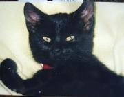 Katzen (Felis silvestris catus) - Trotzdem muss man damit rechnen, dass sie auch Möbel oder Tapeten zum Kratzen benutzt.