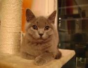 Katzen (Felis silvestris catus) - Sichern Sie Ihre Fenster mit entsprechenden Gittern. In gekippten Fenstern können sich Katzen einklemmen und beim Versuch, sich zu befreien, tödlich verletzen.