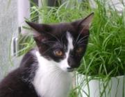 Katzenbetreuung Wien -  Katzenbabys / In ihrer Umwelt orientieren sich die Kätzchen zur Zeit noch hauptsächlich mit dem Geruchssinn, der schon sehr gut entwickelt ist, mit dem Tastsinn und der Temperaturwahrnehmung.