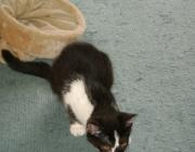 Katzenbetreuung Wien -  Katzenbabys / Nach der Geburt sind die Kätzchen blind, taub und ausgehungert. Sie wiegen etwa 100 Gramm, wobei das Gewicht zwischen 60 bis 140 Gramm variieren kann.