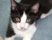 Katzenbetreuung Wien -  Katzenbabys / Die Katzenmutter wählt ihre Körperhaltung so, dass ihr Gesäuge für die Jungen zugänglich ist.