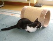 Katzenbetreuung Wien -  Katzenbabys / In den ersten paar Wochen versorgt die Mutter ihre Jungen mit allem, was sie brauchen.