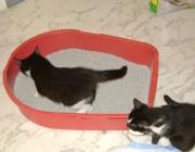 Katzenbetreuung Wien -  Katzenbabys / Täglich nehmen die Kätzchen zwischen 5 und 25 g zu.