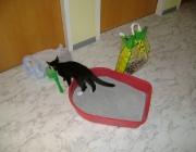 Katzenbetreuung Wien -  Katzenbabys / Ab der 3. Woche ist das Sehvermögen voll entwickelt und sie beginnen langsam, alles zu erkunden.