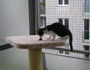 Katzenbetreuung Wien -  Katzenbabys / Zunächst wirkt alles noch sehr tollpatschig aber die Katzen lernen schnell. Sogar erste Putz- und Kletterversuche kann man beobachten.