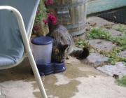Outdoor Catsitting - Tier Einzelbetreuung Wien