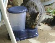 Freigänger Katzenbetreuung - Tierbetreuung Wien