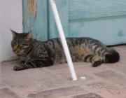 Hauskatzen Betreuung Wien - Haustiersitter Wien