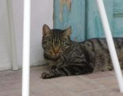 Hauskatzensitter Wien - Homesitting Wien