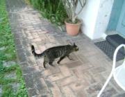 Haustiersitter Wien - Tierbetreuer Wien