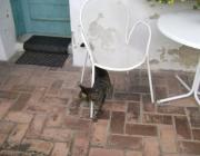 Katzen Outdoor Betreuung Wien - Tiersitter Wien