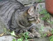 Cat Daysitter Wien - Katzen Tagesbetreuung Wien