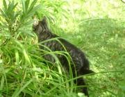 Catsitter Wien - Vorort Haustiersitter Wien