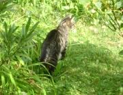 Katzenbetreuung, Hundebetreuung, Kleintierbetreuung - Tierbetreuung Wien