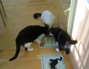 Catsitterservice Wien - Tiersitterservcie Wien