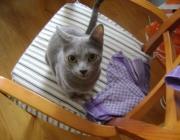Katzen - Haustierbetreuung Wien