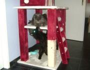 Hauskatzen - Betreuungsservice Wien