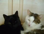 Tiersitting Wien - Katzen