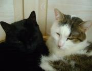 Tierbetreuung Wien - Katzen