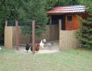 Kleintiere / Hühner - Von dort aus dürften sie über die Griechen zu den Römern gelangt sein. Die Hühnerhaltung in Europa begann um 700 v. Chr. Verbreitet wurden die Haushühner vor allem von den Römern, die auch damit begannen, aus einheimischen Hühnern neue Rassen zu züchten.