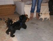Hundebetreuung Wien - Welpen / Ohne sie hätten die Kleinen keine Überlebenschance: sie ernährt die Welpen, putzt sie und hält sie schön warm, denn auch ihre Körpertemperatur können die kleinen Nesthocker noch nicht selbst regulieren.