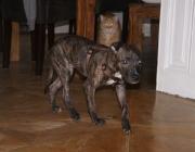 Hundebetreuung Wien - Welpen / denn nur diese Erstmilch enthält die für den Immunschutz der Welpen so lebenswichtigen passiven Antikörper.
