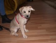 Hundebetreuung Wien - Welpen / Deshalb ist es notwendig darauf zu achten und alles zu versuchen, dass die Neugeborenen so bald wie möglich nach der Geburt am Gesäuge trinken und so ein Maximum an diesen Antikörpern übertragen bekommen.