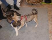 Hundebetreuung Wien - Welpen / So macht das Zusammenwirken von Angeborenem und Erlerntem letztlich das Wesen unseres Hundes aus.
