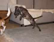 Hundebetreuung Wien - Welpen / Etwa am Anfang der dritten Lebenswoche macht der Welpe einen großen Schritt in seinem Dasein. Seine Augen öffnen sich, und das Gehör beginnt zu funktionieren.
