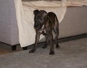Hundebetreuung Wien - Welpen / Auch seine Milchzähne brechen durch. Aufgrund dieser Veränderungen erweitert sich die Wahrnehmungsfähigkeit, und auch der Bewegungsdrang des kleinen Hundes wird immer größer.