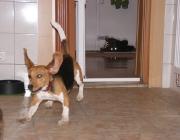 Hundebetreuung Wien - Welpen / Nun beginnt er, aktiv seine Umwelt zu erkunden, und ist gerüstet für den nächsten, ganz entscheidenden Lebensabschnitt.