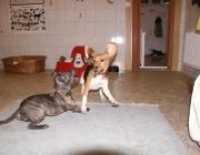 Hundebetreuung Wien - Welpen / Anfang der 4. Lebenswoche setzt der erste Teil der Sozialisierungsphase ein, der etwa bis zum Anfang der 8. Lebenswoche dauert.